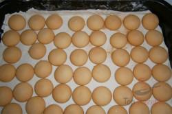Zubereitung des Rezepts Apfelkuchen mit Pudding – FOTOANLEITUNG, schritt 2