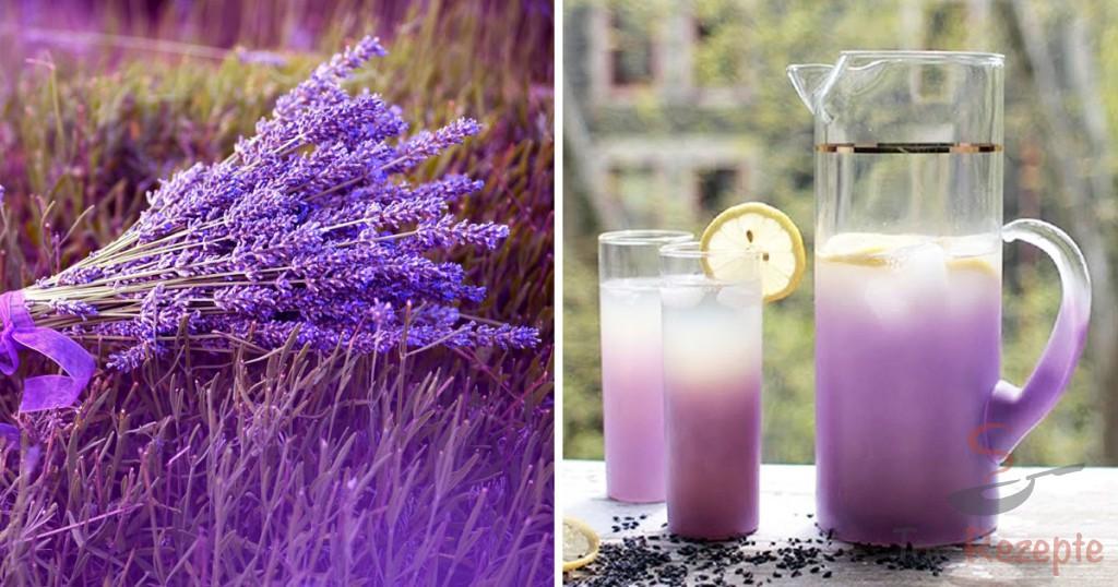 wundermittel lavendel und rezepte f r lavendeltee limonade und l top. Black Bedroom Furniture Sets. Home Design Ideas